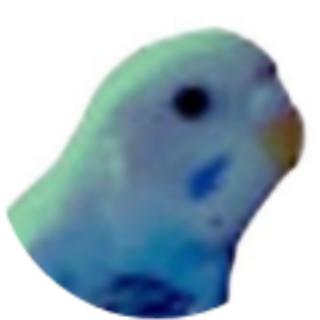 BlueJay's Avatar