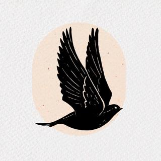 Blackbird   Estúdio Criativo's Avatar